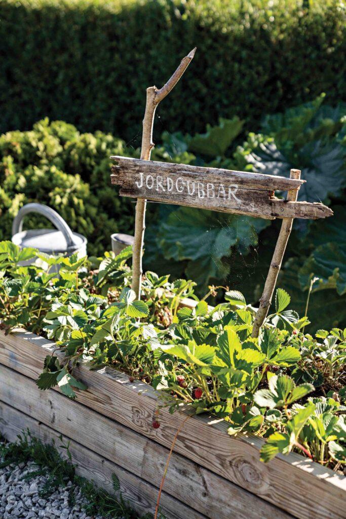 jardin maison style moderne et contemporain